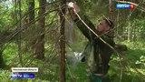 Вести 2000 Из-за аномально жаркой весны жук-короед атаковал дачные участки