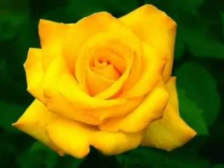 [v-s.mobi]Нежная песня поздравления с днем рождения и много роз!! — Видео@Mail Ru клип онлайн.mp4