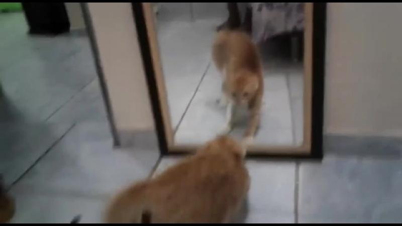 кот обосрал от страха