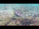 Иглокожая рыба. о. Изабела