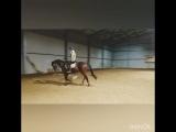 Рита и Хаммер 15.02.18