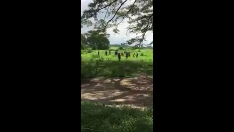Голодные жители Венесуэлы, мирового лидера по запасам нефти, с палками и камнями охотятся на корову в одном из фермерских хозя