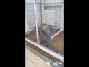 Опасная обезьянка 🐒 и ручной енот🐾 😀
