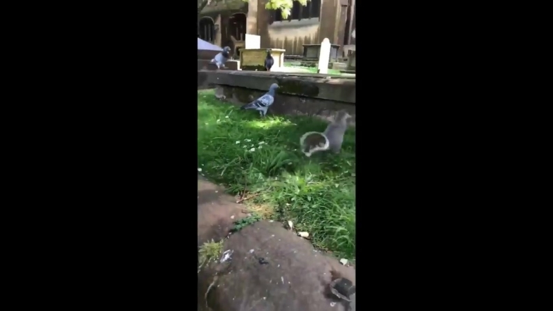 Lad feeds a squirrel a peanut then the squirrel fist bumps him