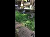 Lad feeds a squirrel a peanut then the squirrel fist bumps him