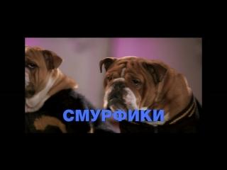 ShowDogs_TLR-2-60s_S-185_RU-XX_RU-6_51_2K_20180427_DCU_IOP_OV