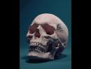Anatomy - stady 4