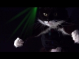 Meow Mix® Song _ EDM Cat Remix by Ashworth
