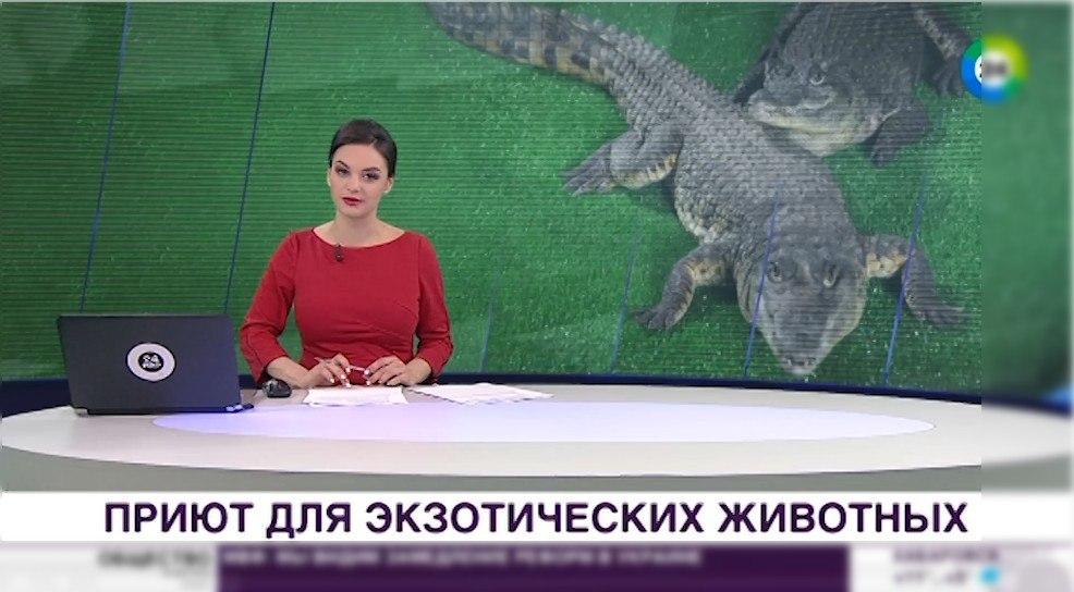 Видео: Под Коломной появился приют для крокодилов