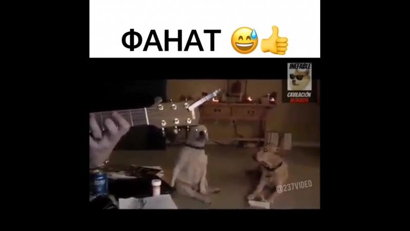 БЛИЗКА НИРВАНА , ДА НЕ УКУСИШЬ )