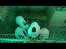Кролики в клетке.