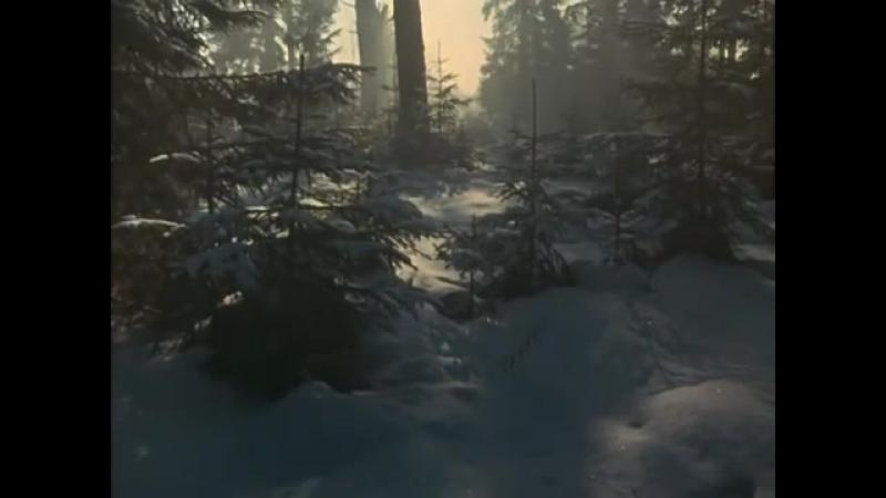 А снег идет Карьера Димы Горина Майя Кристалинская