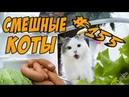 Самые Милые Котики - Смешные Приколы с Котами 2018 - Коты и Кошки ДО СЛЁЗ