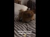 Hatchi foi pego no flagra com o Olaf da Perrie