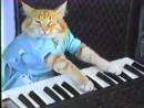 ебнутый кот долбит по клавишам