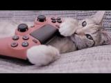 GTA Online: Паутина тупежа, или слава Черной Пятнице. Донатим Инге на ДР