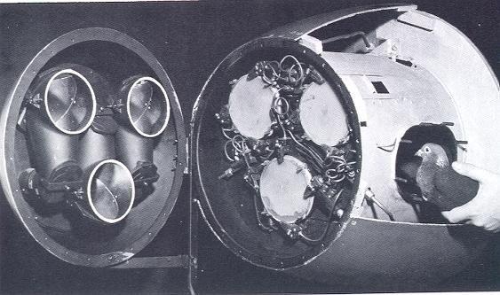 Голуби для наведения ракет