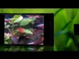 Топ 10 самых красивых аквариумных рыбок!