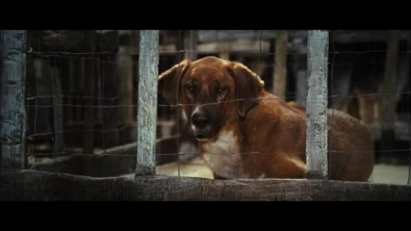 Трейлер Крошка из Беверли-Хиллз (2008) - SomeFilm.ru