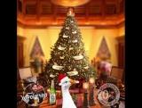 Новогоднее дерево Пана Гуса