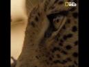 Всемирный день дикой природы I National Geographic