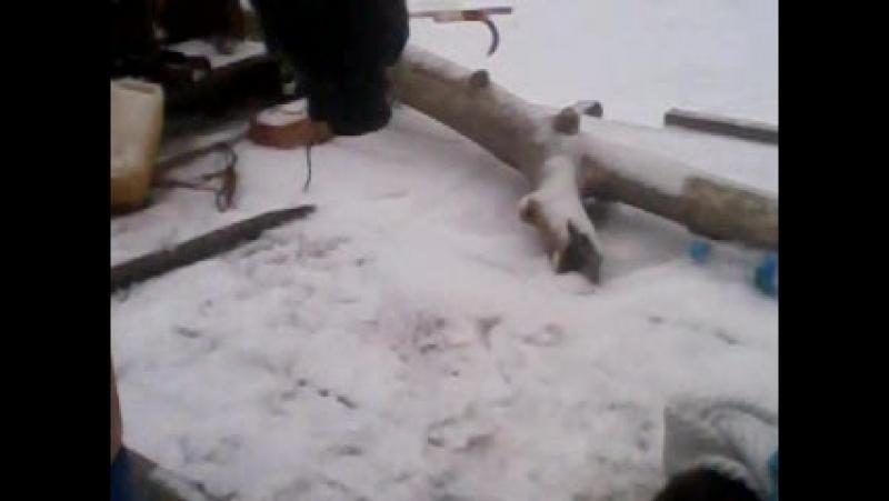 Video-2011-01-01-04-27-47