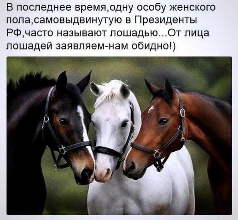https://pp.userapi.com/c834103/v834103127/6666/kUW_H3_lPRw.jpg
