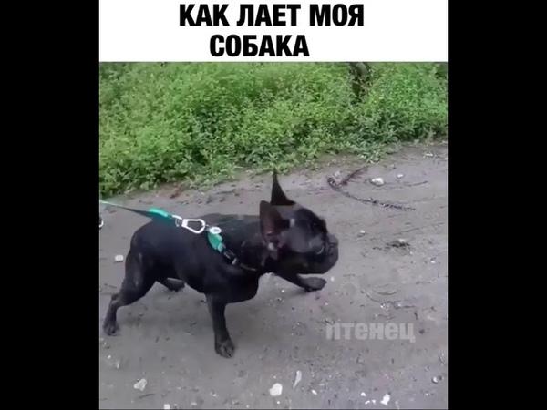 Как лает моя собака