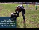 гиперактивная собака развитие через упражнения