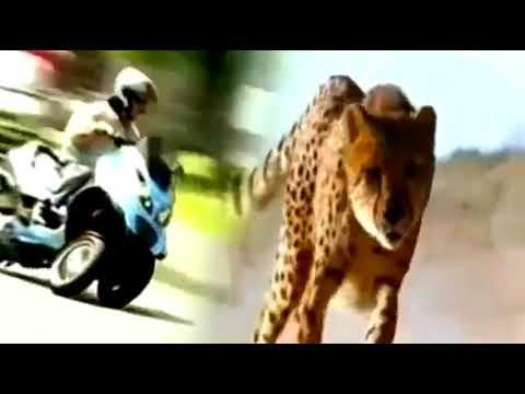 Italo disco 80s. Modern Martino - Race Animal Bikes. Walking magic fly love mix
