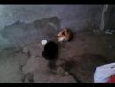 Котята (около 4-5 мес.) черный дым и трёхцветка. Ищут дом или передержку СРОЧНО!
