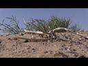Wind Sand Desert Ambient Free Sound Effect SFX Sound Devices MM1 Preamp