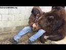 Медведь после тяжёлого дня любит обниматься со своим лучшим другом