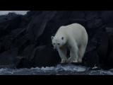 Нетронутая Арктика