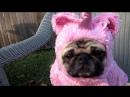 Unicorn Pug's Tea Party Violenza domestica Mr Bungle