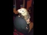 The Story of LJ the orphaned opossum has 21071 members My four brothers