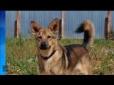 История собаки по кличке