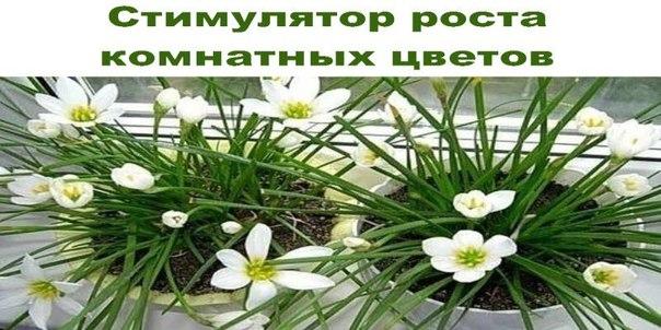Стимулятор роста комнатных цветов.