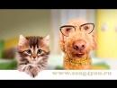 Котенок и Щенок дружба в школе👫