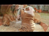 Мамы и детеныши Животные и их малыши