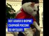 Кот Ахилл в форме сборной России по футболу
