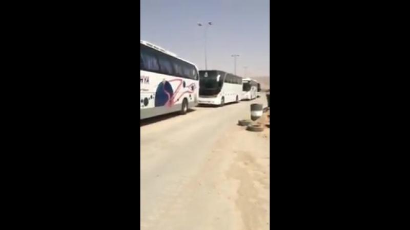 Автобусы начали прибывать в Харасту для вывоза боевиков и их семей