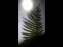 луна ёлка волк