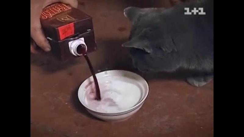 Василь Кіт навчив котів курити і пити)