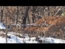Украина-ДНР.Декабрь 2017.Снайпер ВСН ликвидировал карателя ВСУ