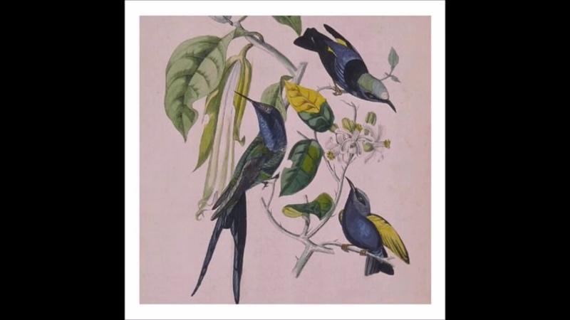 Susumu Yokota (Sakura 1999, Álbum Completo)