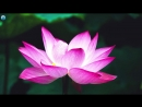 3 HOURS Relaxing Music Eastern Meditation Background for Yoga, Massage, Spa 🎵16