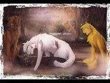 .AMV Warriors Cats Коты Воители ~ Copycat.