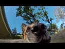Овчарка украла у хозяина GoPro и сняла погоню на видео
