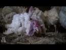 Исцеление планеты: Важно, что ты ешь (фильм H.O.P.E. What You Eat Matters)